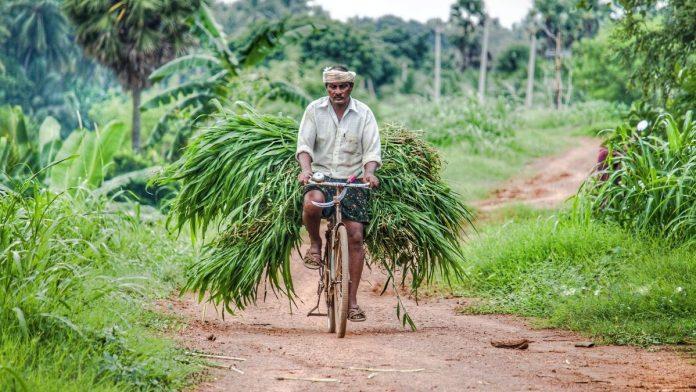Campesinos recibieran beneficios económicos