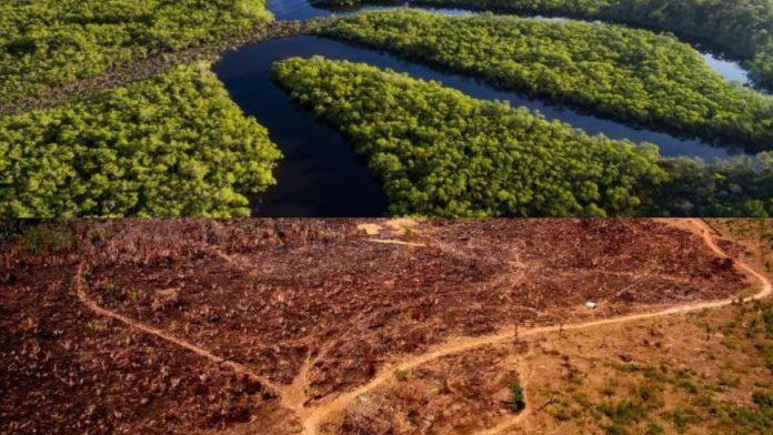 Deforestación en Colombia