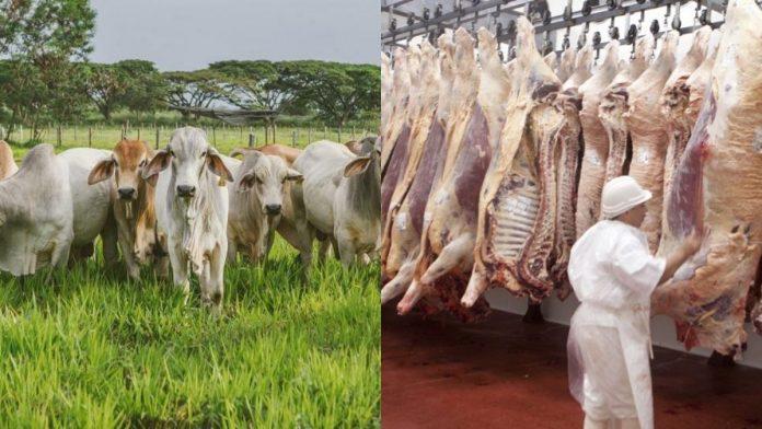 Colombia amplió el mercado y exportará carne bovina hacia Chile
