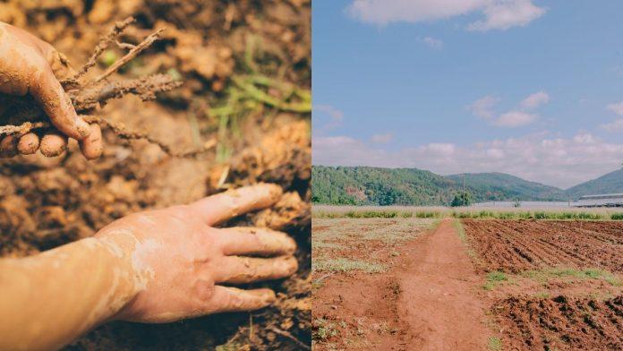 Colombia cuenta con potencial para sembrar alimentos en 39 millones de hectáreas: MinAgricultura