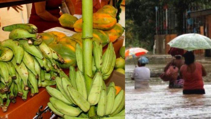 Campesinos donan alimentos a damnificados en Cartagena