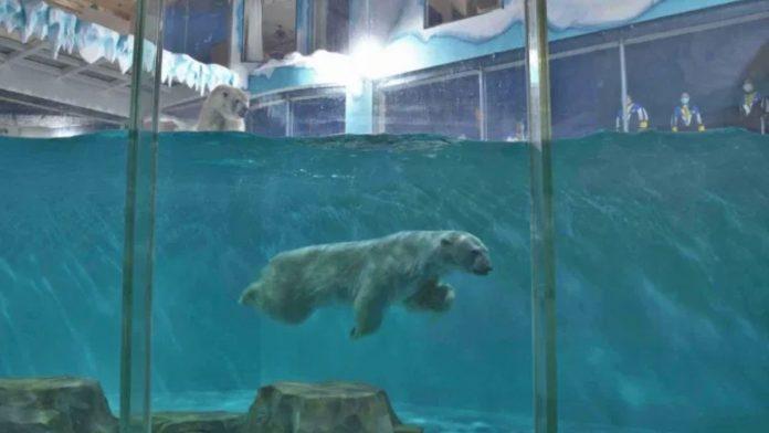 Hotel de los osos polares es un atentado contra los animales