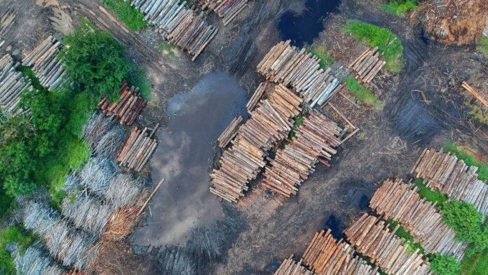 Destrucción de bosques sigue en aumento