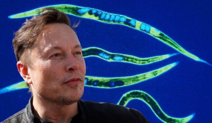 Los gusanos fueron lanzados por SpaceX, que es propiedad del multimillonario Elon Musk