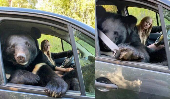 El oso del Himalaya, llamado Toptyzhka, fue fotografiado viajando con Veronika Dichka .Crédito Caters