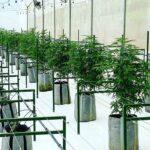 Flora Growth Corp realiza una inversión de 2 millones de euros en Hoshi como parte de su plan de expansión europeo