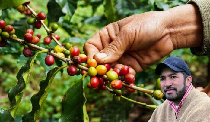La propuesta de César Pachón para el café colombiano